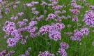 Как определить срок посева семян цветов на рассаду?