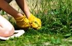 Выпалывание сорняков