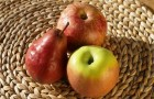 Яблоки, груши, йогурт