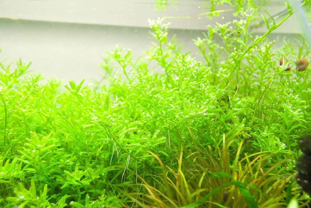 Закалка растений