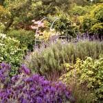 Арки в саду8