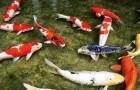 Болезни и вредители рыб