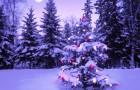 Геном новогодних ёлок