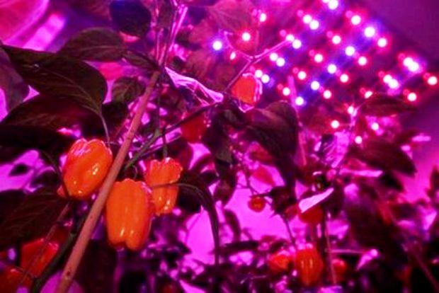 Освещение растений в теплицах