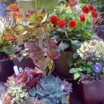 Растения для посадки в контейнеры 11