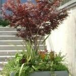 Растения для посадки в контейнеры 9