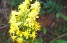 Растения умеют чувствовать запахи