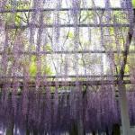 Садовые экраны, ширмы, решетки1