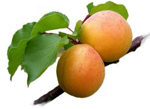 Сорт абрикоса: Дженгутаевский