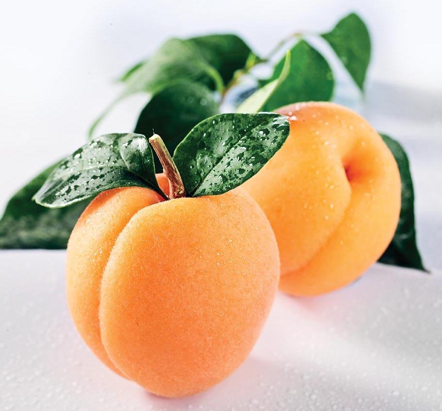 Сорт абрикоса: Рекламный