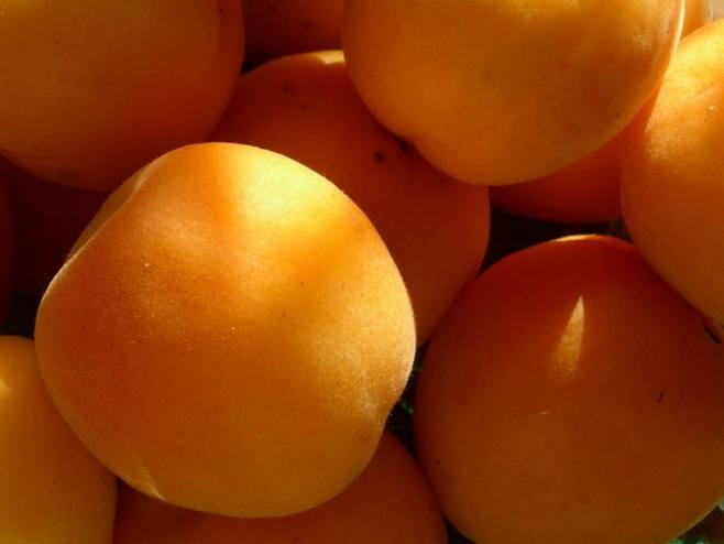 Сорт абрикоса: Унцукульский поздний