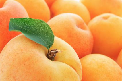 Сорт абрикоса: Уралец