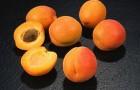 Сорт абрикоса: Водолей