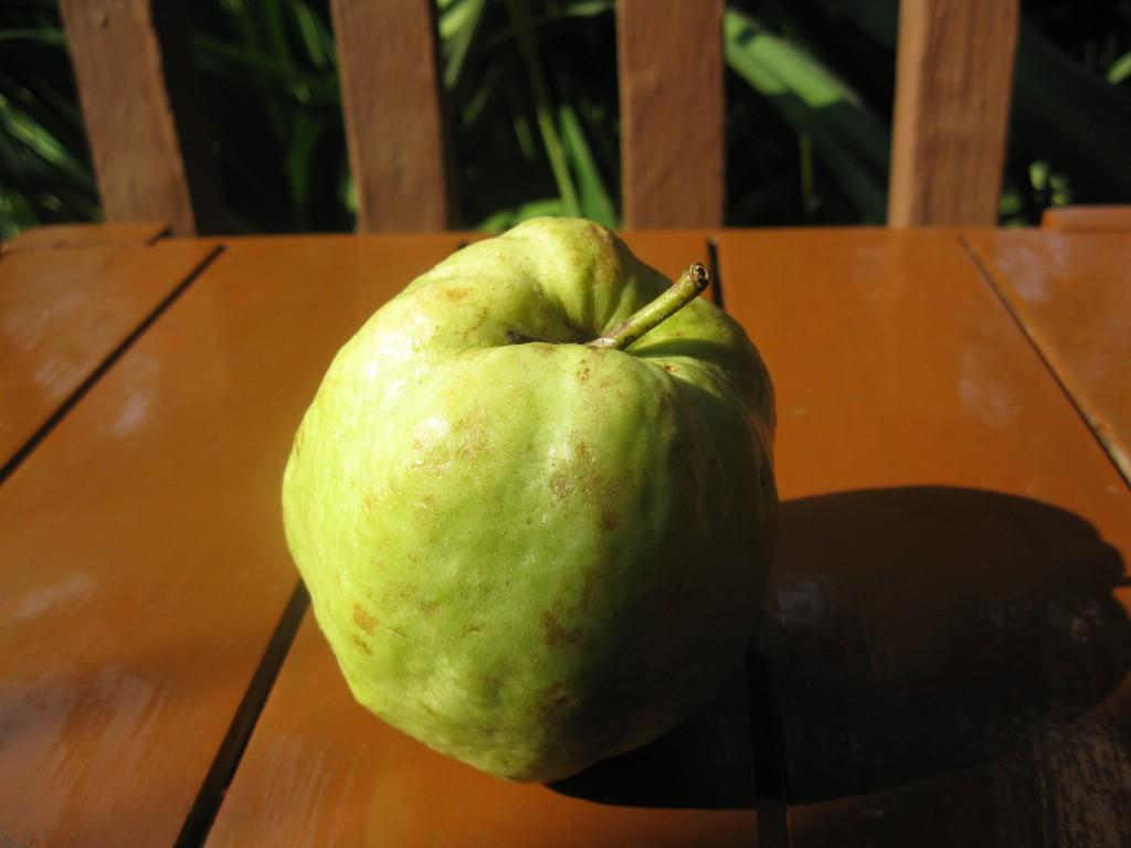 Сорт айвы: Зубутлинская