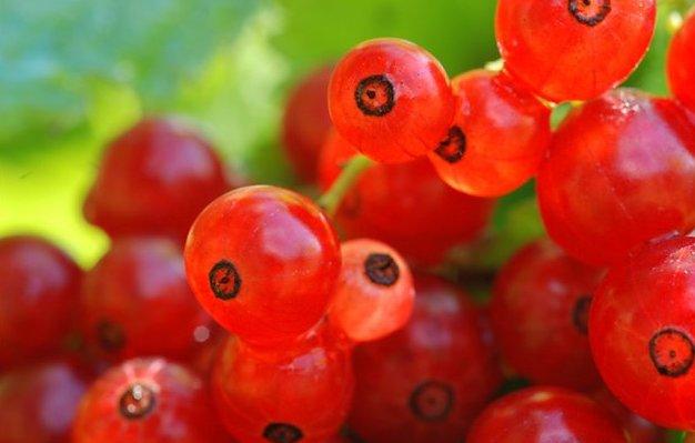 Сорт красной смородины: Дана
