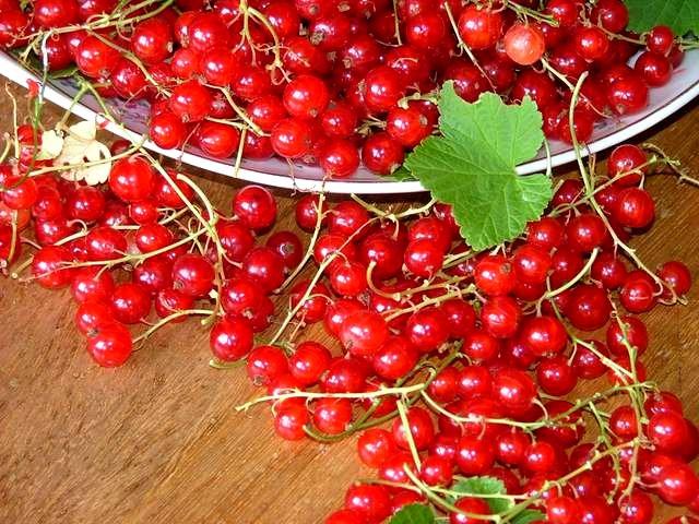 Сорт красной смородины: Обской закат