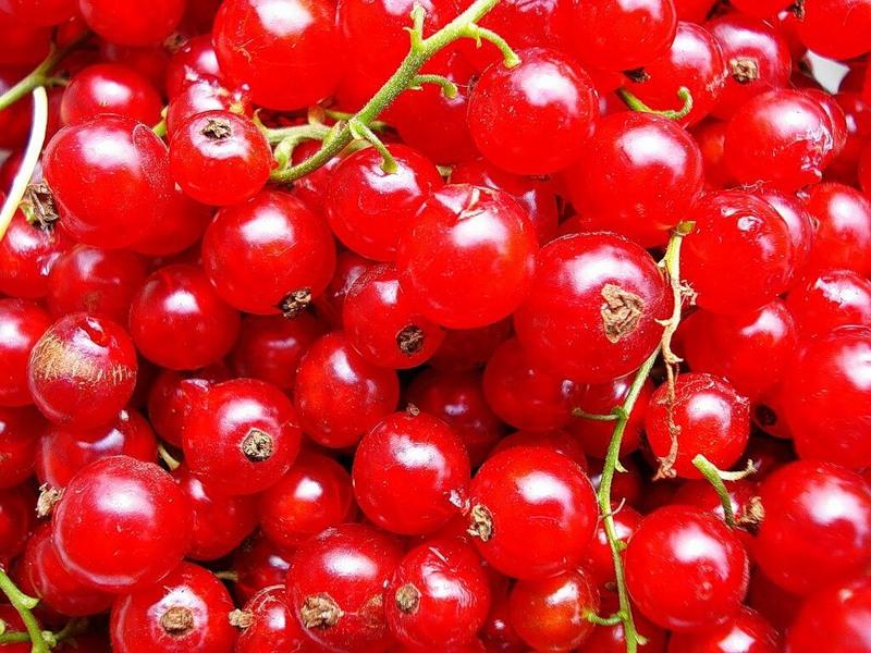 Сорт красной смородины: Валентиновка