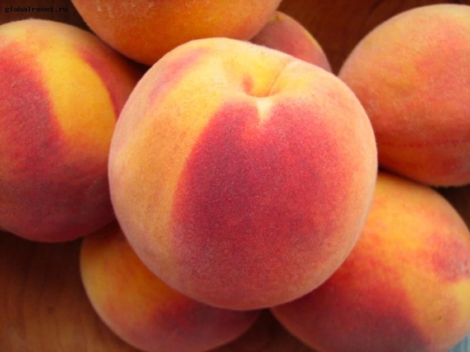 Сорт персика: Нальчикский августовский