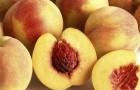 Сорт персика: Радужный 86