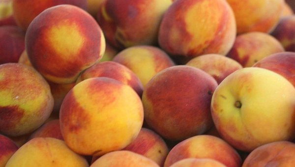 Сорт персика: Ранний Кубани