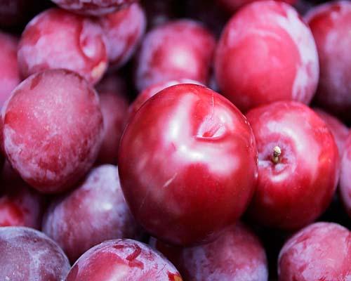 Сорт сливы домашней: Нальчинская урожайная