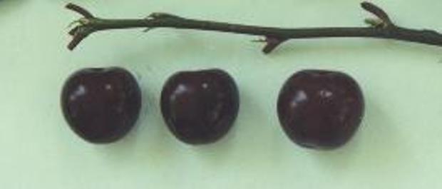 Сорт вишни обыкновенной: Ливенская