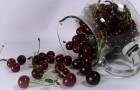 Сорт вишни степной: Прозрачная