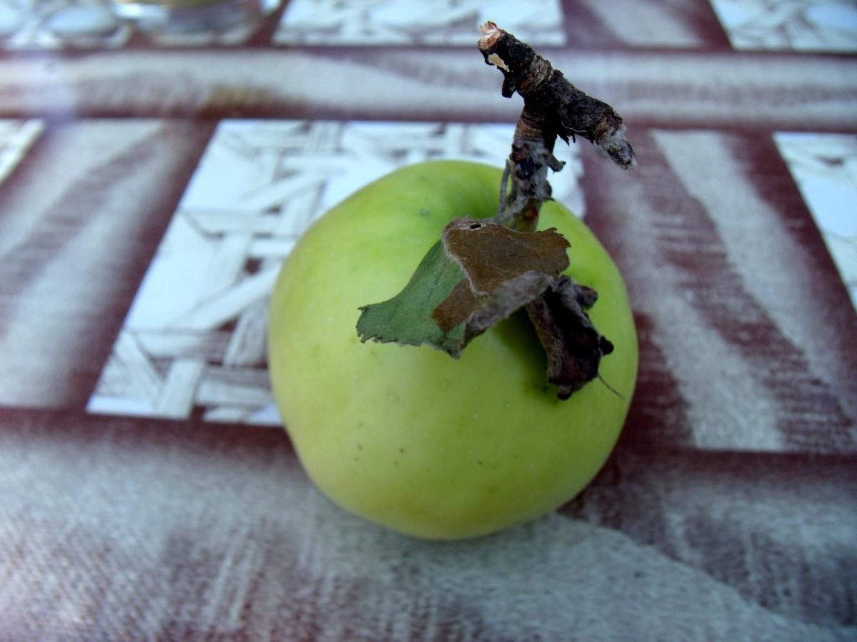 Сорт яблони: Ахтубинское