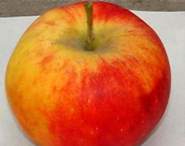 Сорт яблони: Алтайское бархатное