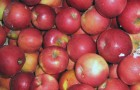 Сорт яблони: Айдаред