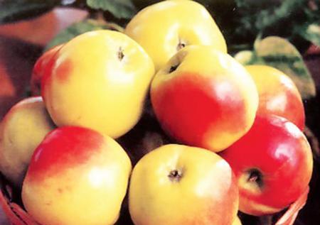 Сорт яблони: Георгиевское