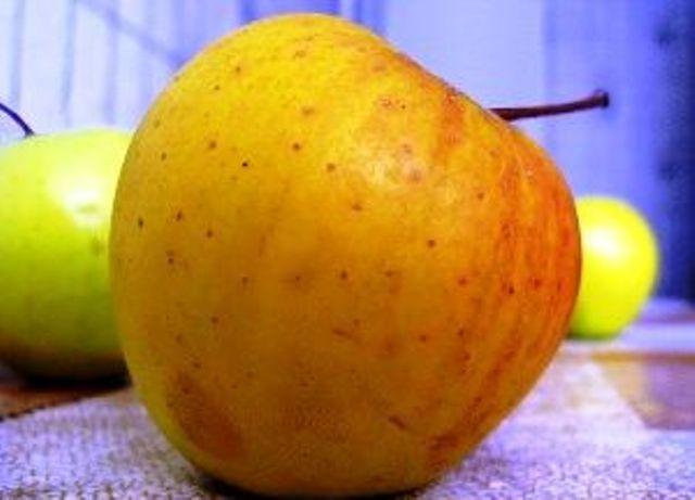 Сорт яблони: Грив Руж (Грив Ред)