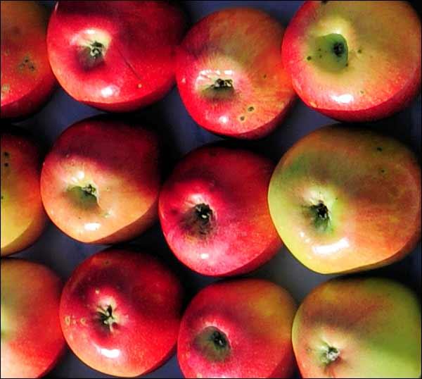Сорт яблони: Карповское