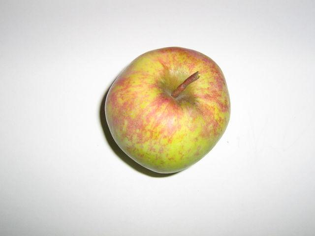 Сорт яблони: Кутузовец