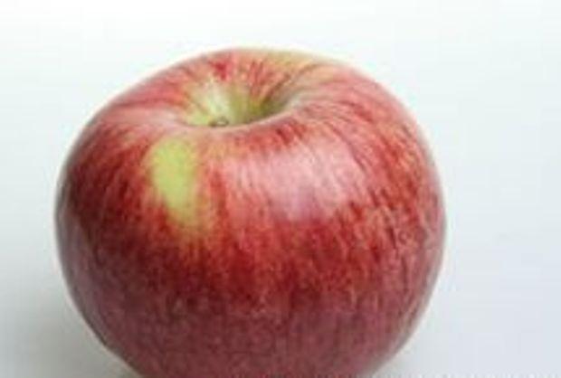 Сорт яблони: Ломоносовское