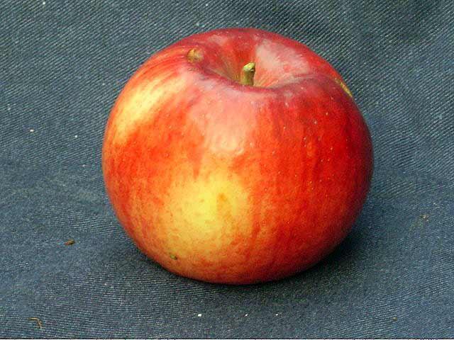 Сорт яблони: Память Ульянищева
