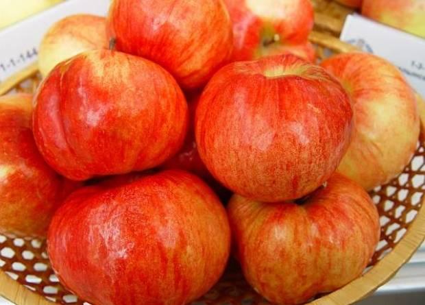 Сорт яблони: Первенец Ртищева