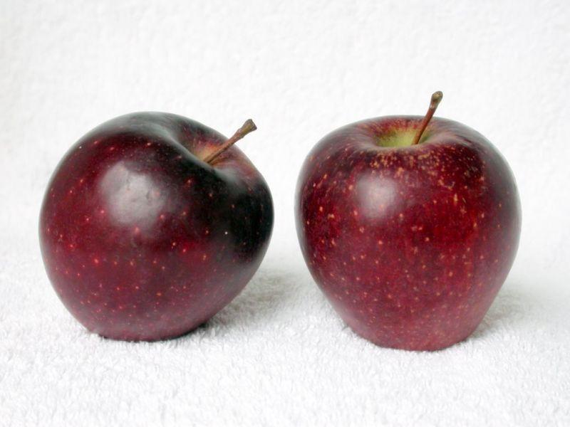 Сорт яблони: Ред Делишес