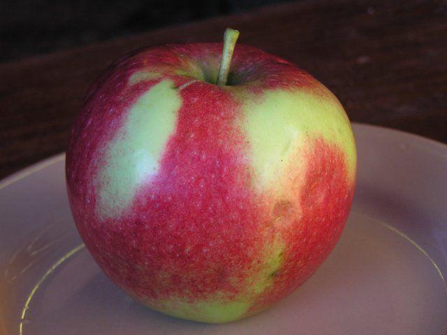 Сорт яблони: Россошанское багряное