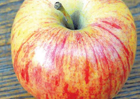Сорт яблони: Россошанское полосатое