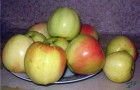 Сорт яблони: Сергиана