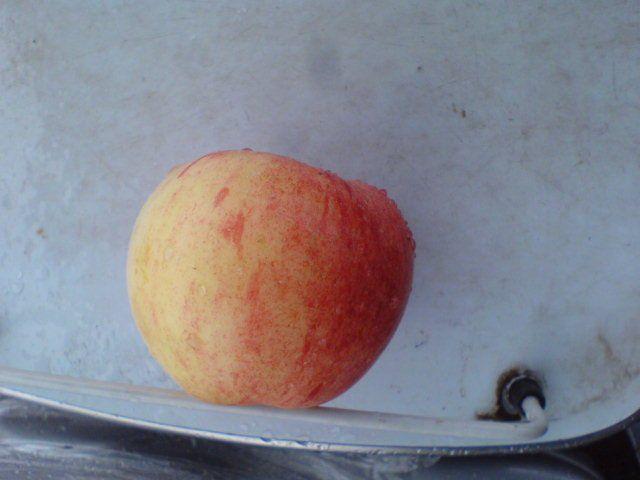 Сорт яблони: Сочинский великан