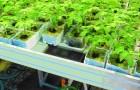 Стеллаж для выращивания рассады