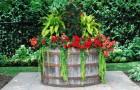 Виды контейнеров для растений