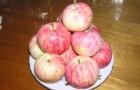Сорт яблони: Абориген