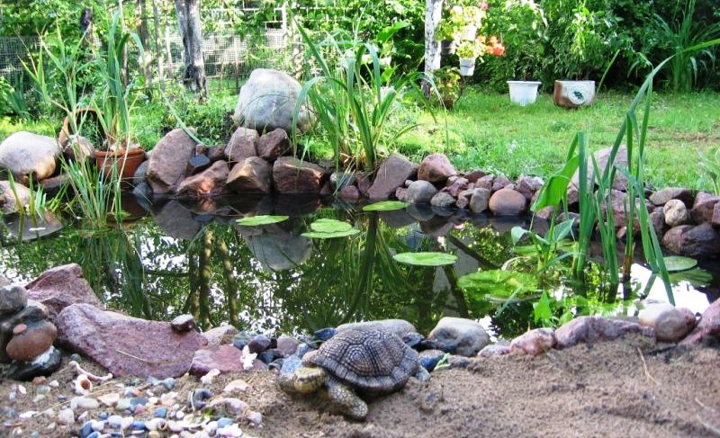 Декоративные водоемы и варианты их оформления