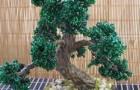 Каркас, бонсай (Каменное дерево)