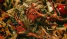 Молодая капуста с лисичками