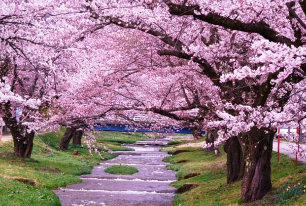 Обрезка деревья с декоративным цветением