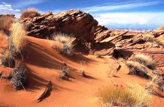Растения способны регулировать чувство жажды